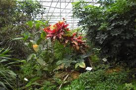 ogród botaniczny warszawa 1